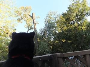 伐採された枝が落ちてくるのが怖くて震えが止まらない黒柴ルイ