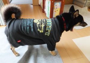お気に入りのTシャツを着た黒柴ルイ