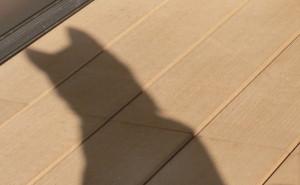 日向ぼっこをする黒柴ルイの影