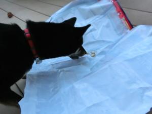 ドッグフードの袋に残った粉をペロペロする黒柴ルイ
