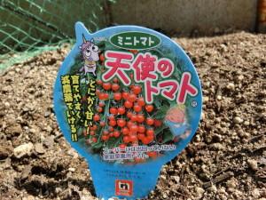 天使のトマトの苗に付いていた札