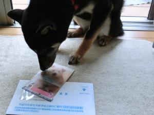 狂犬病予防接種とファラリア予防のご案内と黒柴ルイ