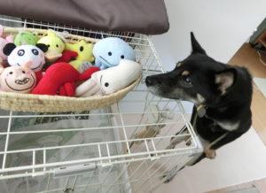 おもちゃを狙う怪盗ルイちゃん登場