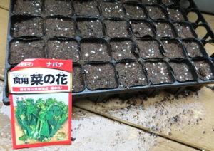 菜の花の種植え完了