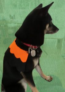 ハロウィンの仮装をした黒柴ルイ