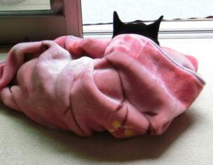 毛布にくるまって黄昏る黒柴ルイ