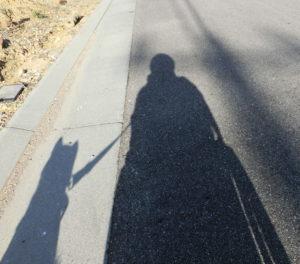 黒柴ルイとのお散歩シルエット