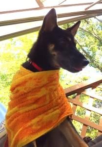 黄色いタオルにくるまれたルイ